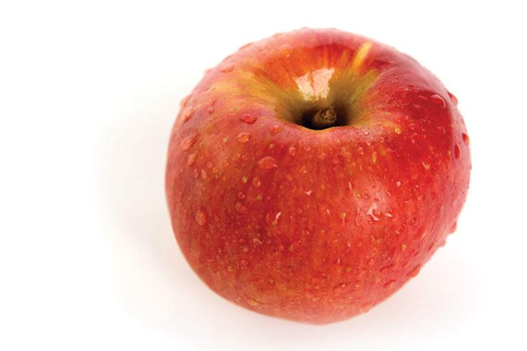 Sweet Zinger™ (MAIA-Z cv. USPPAF)